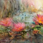 Enchantment of water lilies